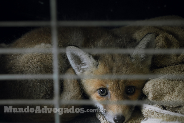 Tráfico de animais silvestres: o que diz a lei brasileira